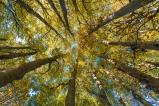 Herbstwald_02_a.jpg