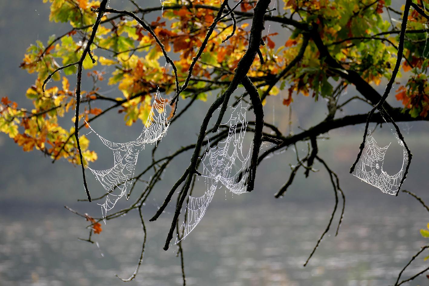 Spinne im November